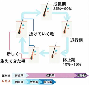 毛髪に関する実験結果